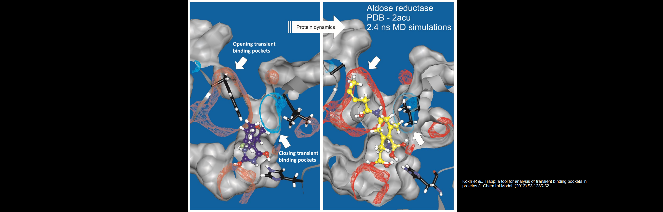 """<strong><font color=""""white"""">TRAPP helps to find transient pockets in proteins</font></strong>"""