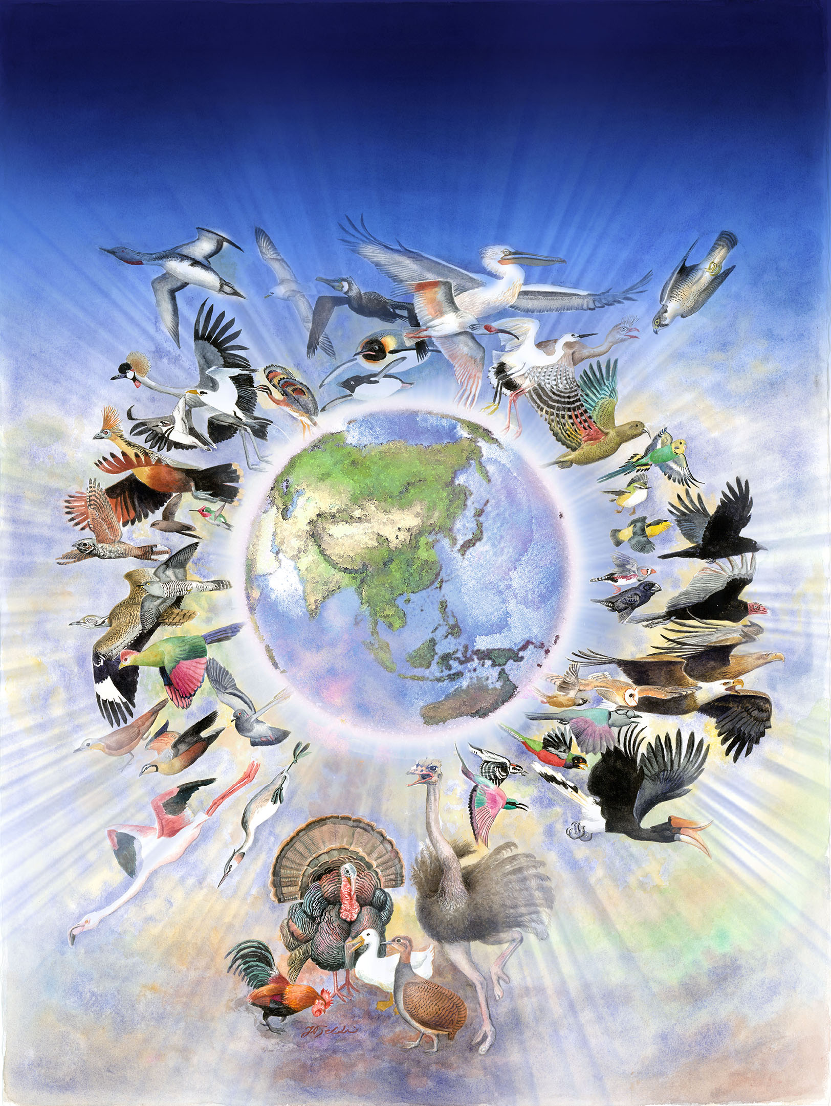 Evolution of birds