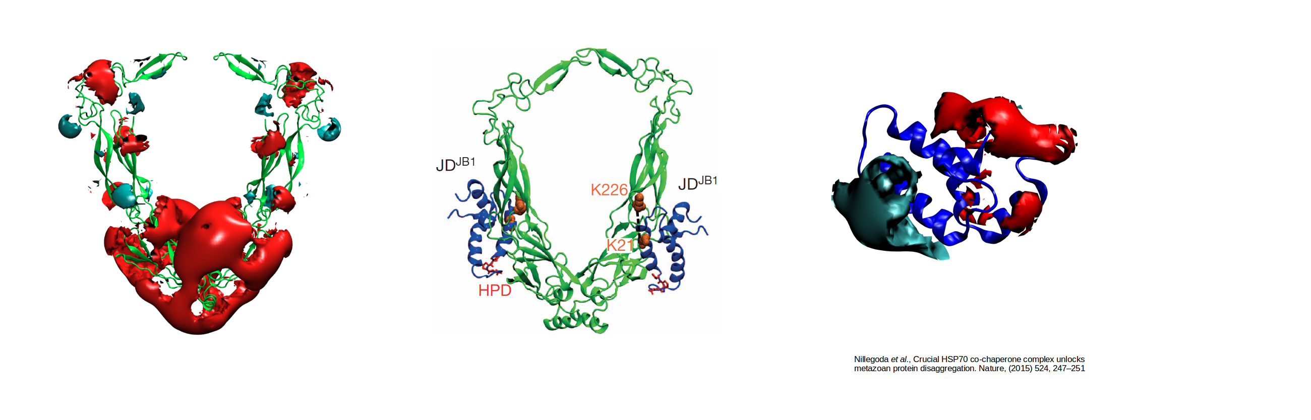 """<font color=""""black"""" size=""""5""""><strong>Electrostatically-guided Brownian dynamics docking of two co-chaperone J-proteins</strong></font>"""