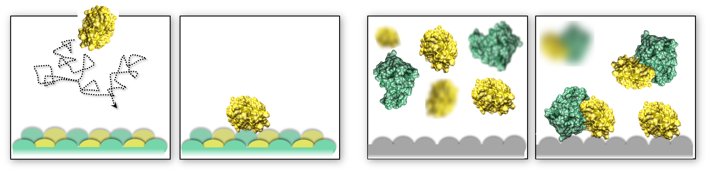 """<font color=""""black""""><strong>Simulations show how proteins recognise and bind to surfaces</strong></font>"""